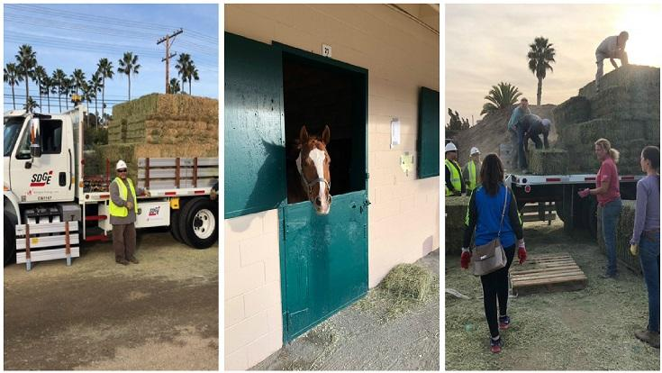 SDG&E Donates A Truck Load of Animal Feed to Evacuated Horses at Del Mar Fairgrounds