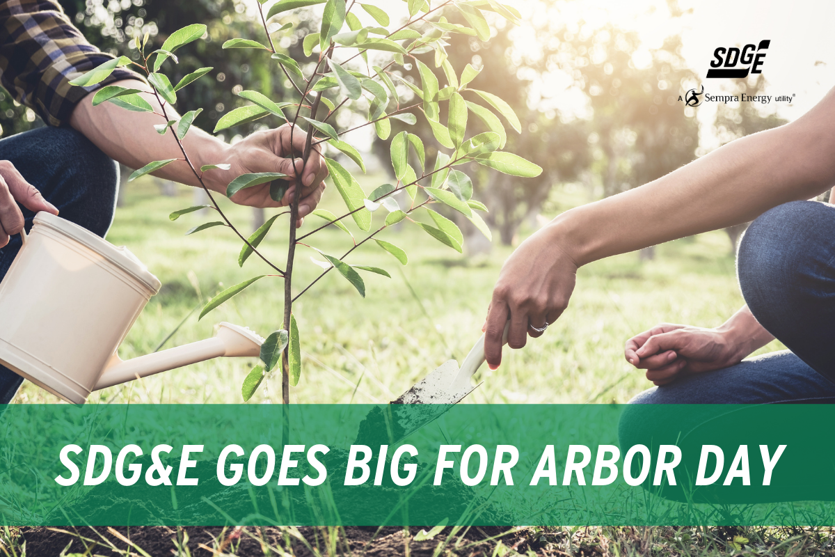 SDG&E Goes BIG for Arbor Day