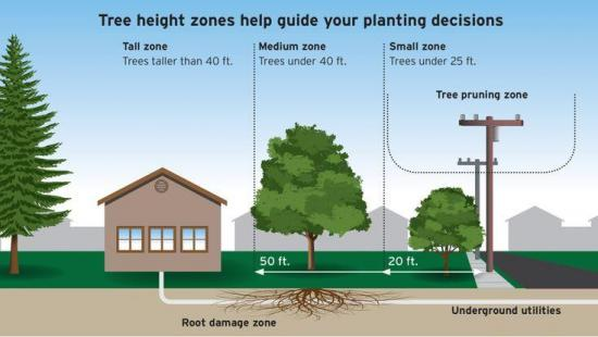 Top 3 Tips for Pruning and Planting Trees at Home