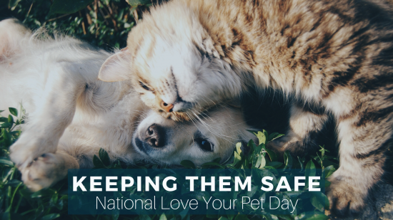 National Love Your Pets Day: 5 Steps to Plan for Your Pet's Safety in an Emergency