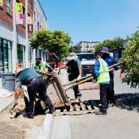 Grow Urban Tree Planting