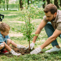 Tree Safety 101: Choosing, Planting and Pruning Without Disturbing Neighborhood Gas or Power Lines
