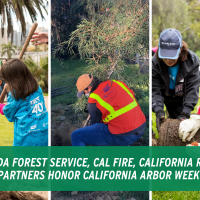 The USDA Forest Service, Cal Fire,  California Releaf, And Partners Honor California Arbor Week 2021