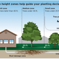 Planting the Right Tree in the Right Place is your Key to a Safe Arbor Month
